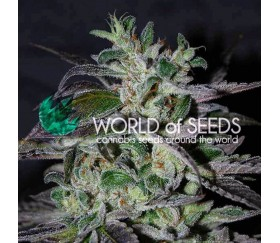 Strawberry Blue Early Harvest - World of Seeds
