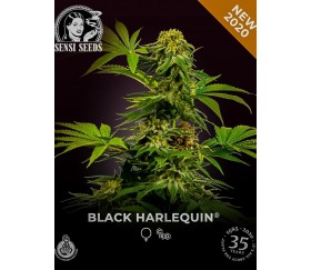 Black Harlequin - Sensi Research