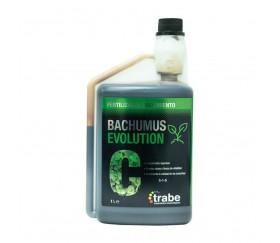 BACHUMUS-EVOLUTION-CRECIMIENTO