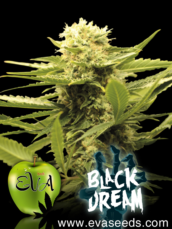 Black Dream, Eva Seeds