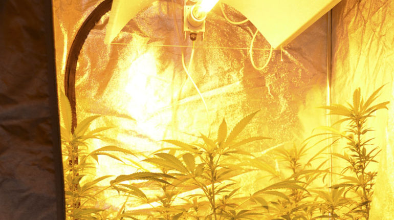Como montar un armario de cultivo de marihuana en interior