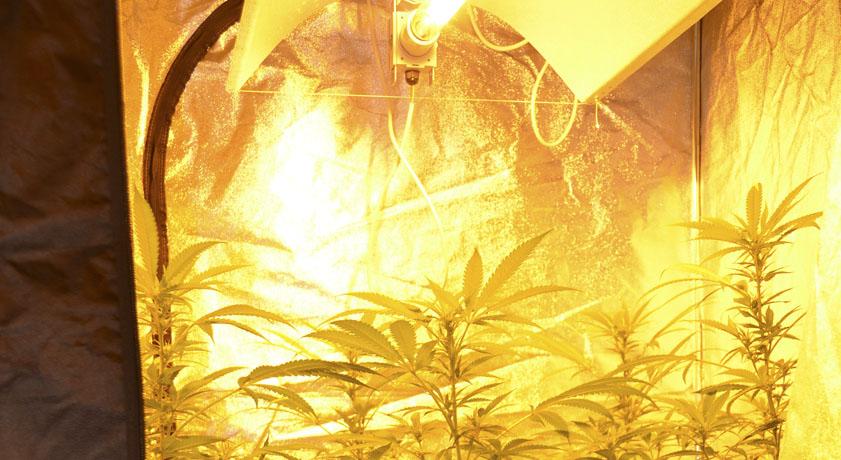 C mo montar un armario de cultivo en interior la huerta for Cultivo interior marihuana