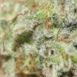 Evitar olores en cultivos de marihuana en interior