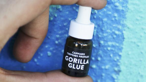 Terpenos de Gorilla Glue de Cali Terpenes