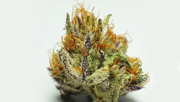 Cogollo de marihuana