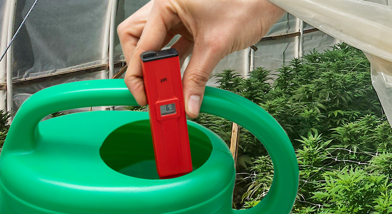 EC y pH agua cultivos marihuana