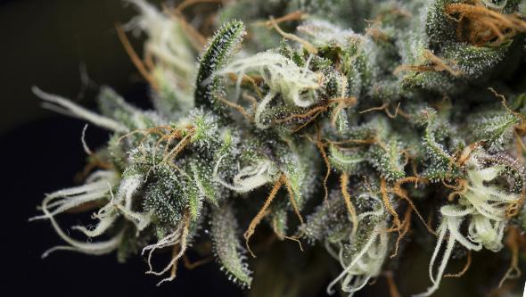 carbohidratos marihuana