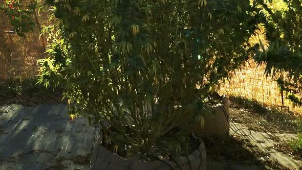 planta cultivada smart pot