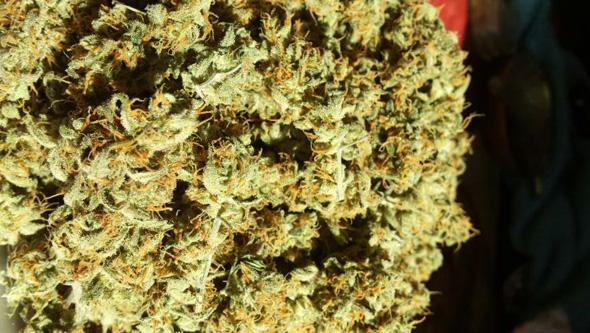 comida cannabis