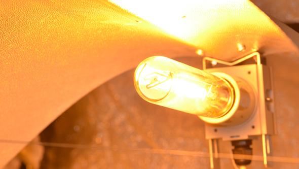 buy sodium lamp