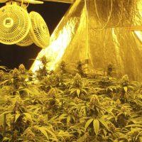Ventilación en cultivos de marihuana en interior
