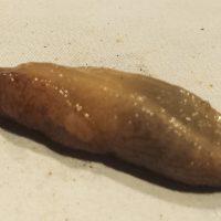 Cómo eliminar caracoles y babosas en marihuana