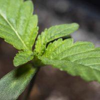 plantar en exterior