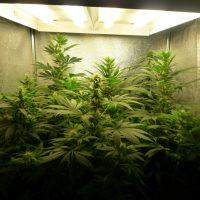 cultivo_bajo_consumo_mitad_floracion_6_plantas_frontal lr