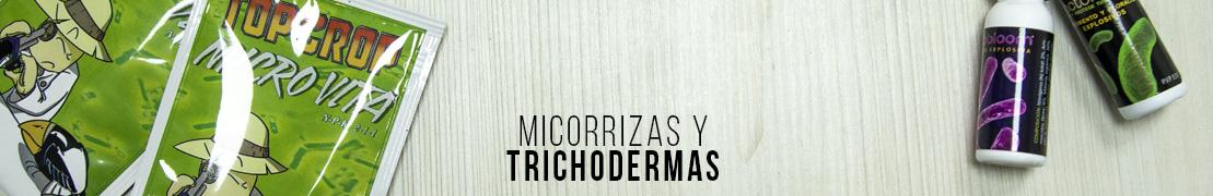 Micorrizas y trichodermas