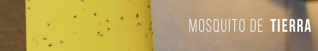 Mosquitos de tierra