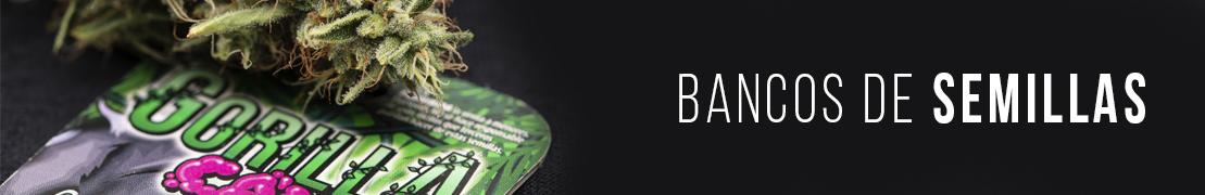 Bancos de semillas de cannabis