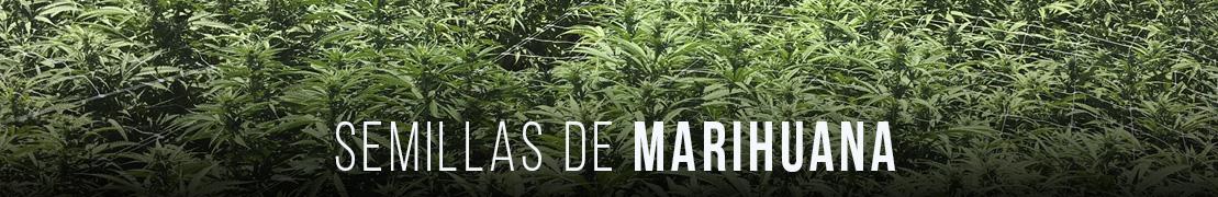 Semillas de marihuana
