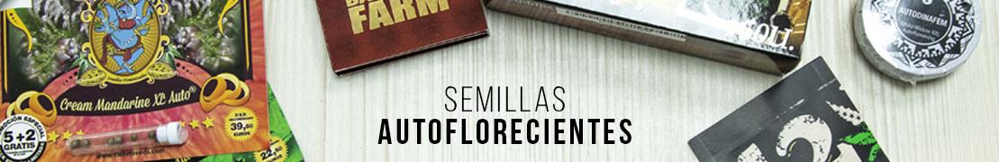 Semillas autoflorecientes