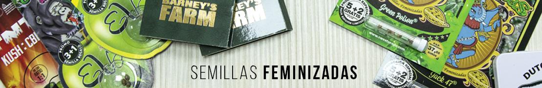 Semillas feminizadas